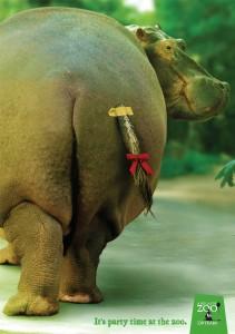zoo21070_hippo_aotw_aotw