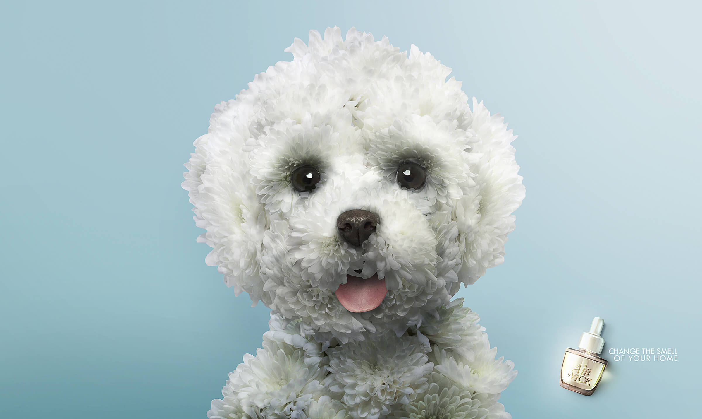 http://www.dreamstime.com/stock-image-close-up-maltese-puppy-panting-looking-camera-isolated-grey-background-image37142781