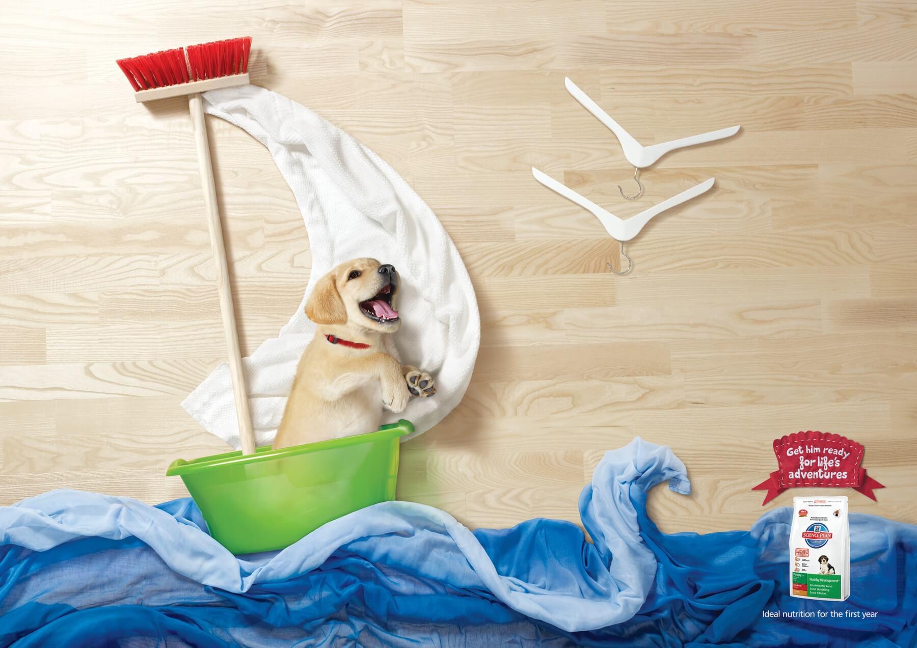 ¿Cachorros aventureros?
