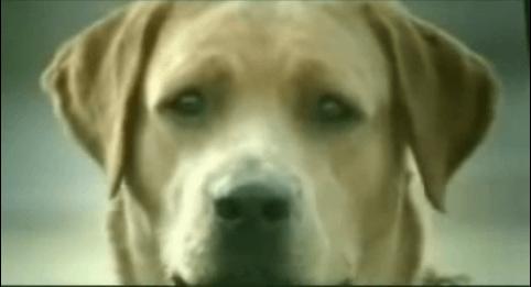 Bridgestone y las perras.